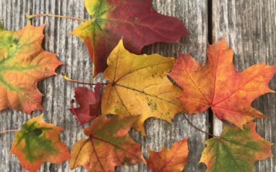Monatsrückblick Oktober – Bücher, Kreativität & Sonnenstrahlen